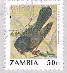 Zambia Bird 50 1 (AP112719)