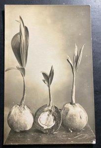 1928 Sandakan North Borneo RPPC Postcard Cover To Netherlands Coconuts