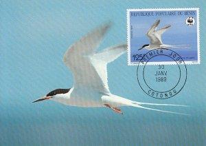 Benin 1989 Maxicard Sc #660 125fr Roseate tern WWF