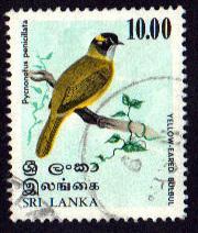 Sri Lanka #569 Yellow Eared Bulbul PM