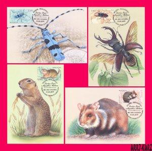 MOLDOVA 2019 Nature Fauna Insects Beetles Mammals Rodents Maxicard Maximum Cards