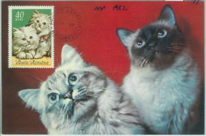 67491  -  ROMANIA  - Postal History -  Maximum CARD 1982 -  CATS cat