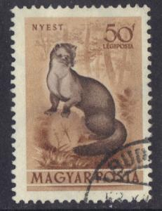 Hungary  1953  used Air forest animals 50fi. beech marten #
