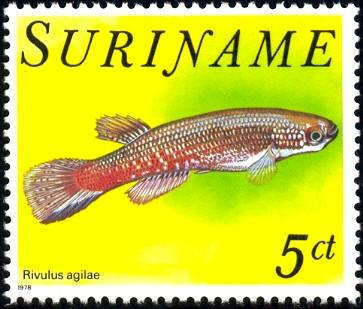 Tropical Fish, Agila Bach Ling, Surinam stamp SC#508 MNH