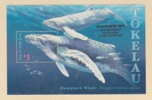 Tokelau Islands Scott #242a Stamps - Mint NH Souvenir Sheet