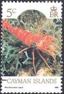 Cayman Islands # 562 used ~ 5¢ Marine Life