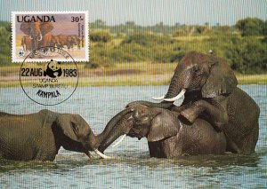Uganda 1983 Maxicard Sc #373 30sh African elephant WWF