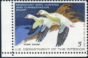 US Duck Stamp RW44 1977 XF 90 - Cert  MNH   S868