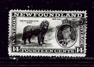 Newfoundland 238 Used 1937 issue