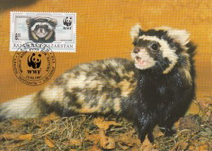Kazakhstan 1997 Maxicard Sc #171 6te Marbled polecat WWF
