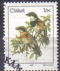CISKEI, 1981 CTO 16c, Birds, Cape puff-back flycatcher