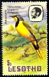 Bird, Shrike, Bokmakierie, Lesotho stamp SC#324 MNH