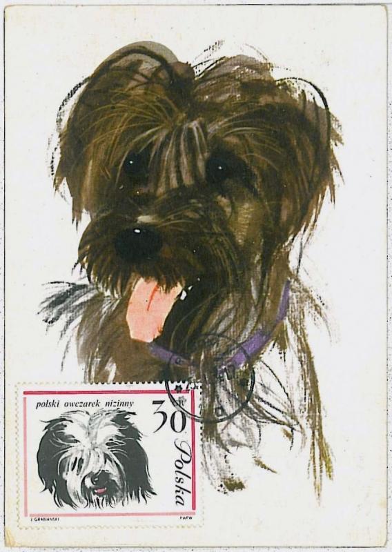 32365  MAXIMUM CARD - Animals DOGS : POLAND 1964 --- Polish Lowland Sheepdog