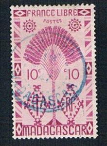 Madagascar 242 Used Travelers Tree (BP14015)