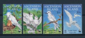 [53504] Ascension 1999 Birds Vögel Oiseaux Ucelli WWF Fairy tern MNH