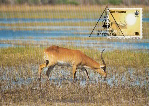 Botswana 1988 Maxicard Sc #433 15t Red lechwe antelope WWF