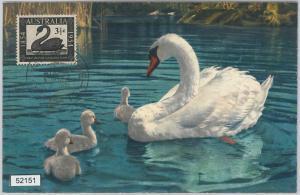 52151 - AUSTRALIA -  MAXIMUM CARD - 1954  ANIMALS:  BIRDS  Swans