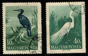 Birds, (3290-T)