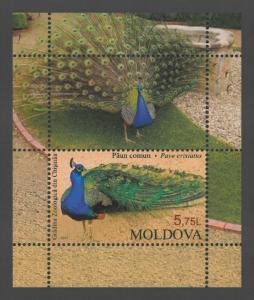 Moldova 2013 Birds Indian Peacock MNH Block
