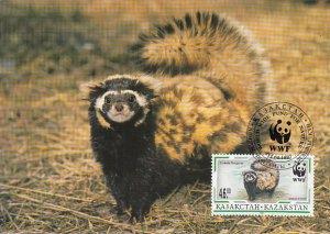 Kazakhstan 1997 Maxicard Sc #174 46te Marbled polecat WWF