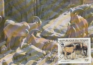 Chad 1988 Maxicard Sc #576 70fr Barbary sheep WWF