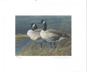 NEBRASKA #1 1991 STATE   DUCK  STAMP PRINT CANADA GEESE by Neal Anderson