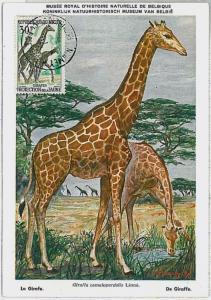 MAXIMUM CARD - POSTAL HISTORY - Nigeria: Giraffes , Wild Animals, Safari