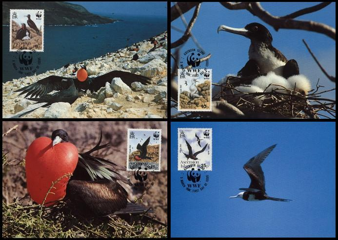 Ascension WWF Frigatebird 4 official Maxicards