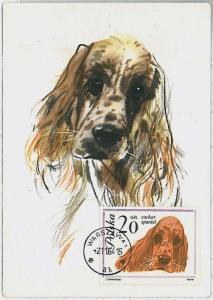 MAXIMUM CARD - Animals DOGS : POLAND 1964 --- Cocker Spaniel