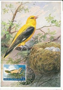 BIRDS : MAXIMUM CARD - SAN MARINO 1960