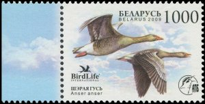 Belarus 2009 Sc 691 Birds Goose