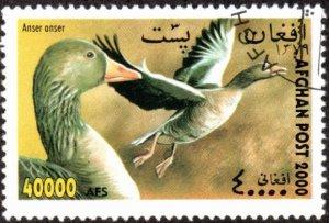 Afghanistan sw1981 - Cto - 40,000af Greylag Geese (2000)