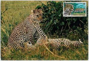 MAXIMUM CARD - POSTAL HISTORY - Gabon: Panthers, Safari, Wild Fauna, 1967