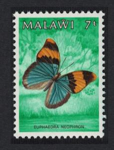 Malawi Gold Banded Forester Butterfly Euphaedra neophron 7t SG#712