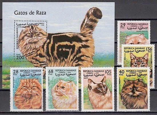 Sahara, 1999 issue. Various Cats set & s/sheet.