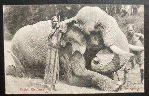 1909 Colombo Ceylon RPPC postcard Cover To Haarlem Netherlands Elephant