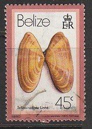 1980 Belize - Sc 481 - used VF - Tellina radiata