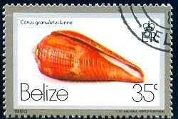 Shell, Conus Granulatus, Belize stamp SC#480 used