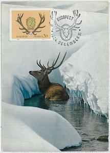 MAXIMUM CARD - POSTAL HISTORY -  Hungary: Deers, Hunting, Fauna, 1964