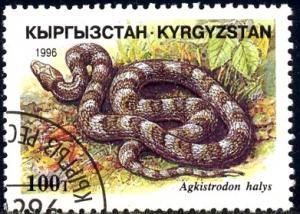 Snake, Agkistrodon Halys, Kyrgyzstan stamp SC#102 Used