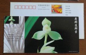 Hebanlianbansu lotus type Cymbidium tortisepalum orchid,CN 01 baoshan orchid PSC
