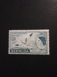 *Bermuda #163*
