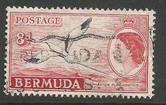 BERMUDA 153 VFU BIRD L3362-2