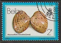 1980 Belize - Sc 472 - used VF - Macrocallista Maculata