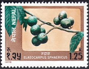 Nepal # 354 mnh ~ 1.25r Tree Branch - Elaeocarpus sphaericus