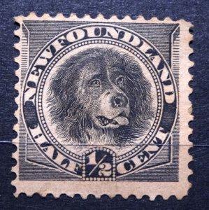 CANADA NEWFOUNDLAND 1894 SG#59 Dog ½c black Unused Hinged