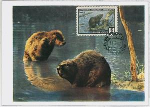 MAXIMUM CARD - POSTAL HISTORY - Russia USSR: Beavers, Castors, 1962