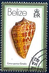 Shell, Conus Spurius, Belize stamp SC#476 used