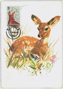 MAXIMUM CARD - POSTAL HISTORY -  Romania: Deers ,  Fauna, 1964