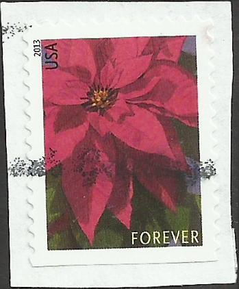 # 4816 USED POINSETTIA